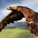 Foto del perfil de Aquila999